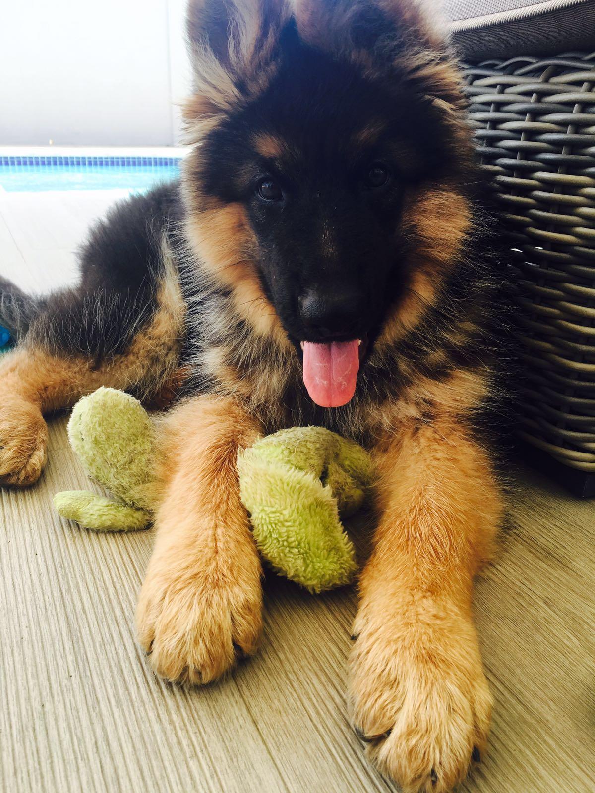 Maxi-Djenka puppy