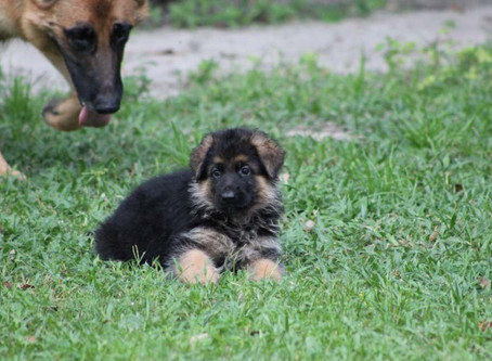 We just got a new puppy what should we do?