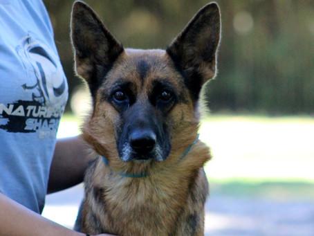 Hemorrhagic Gastroenteritis in Dogs