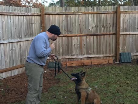 Impulse control –  Teaching- Structure  dogs calm and polite behavior
