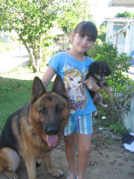 German Shepherds in Florida