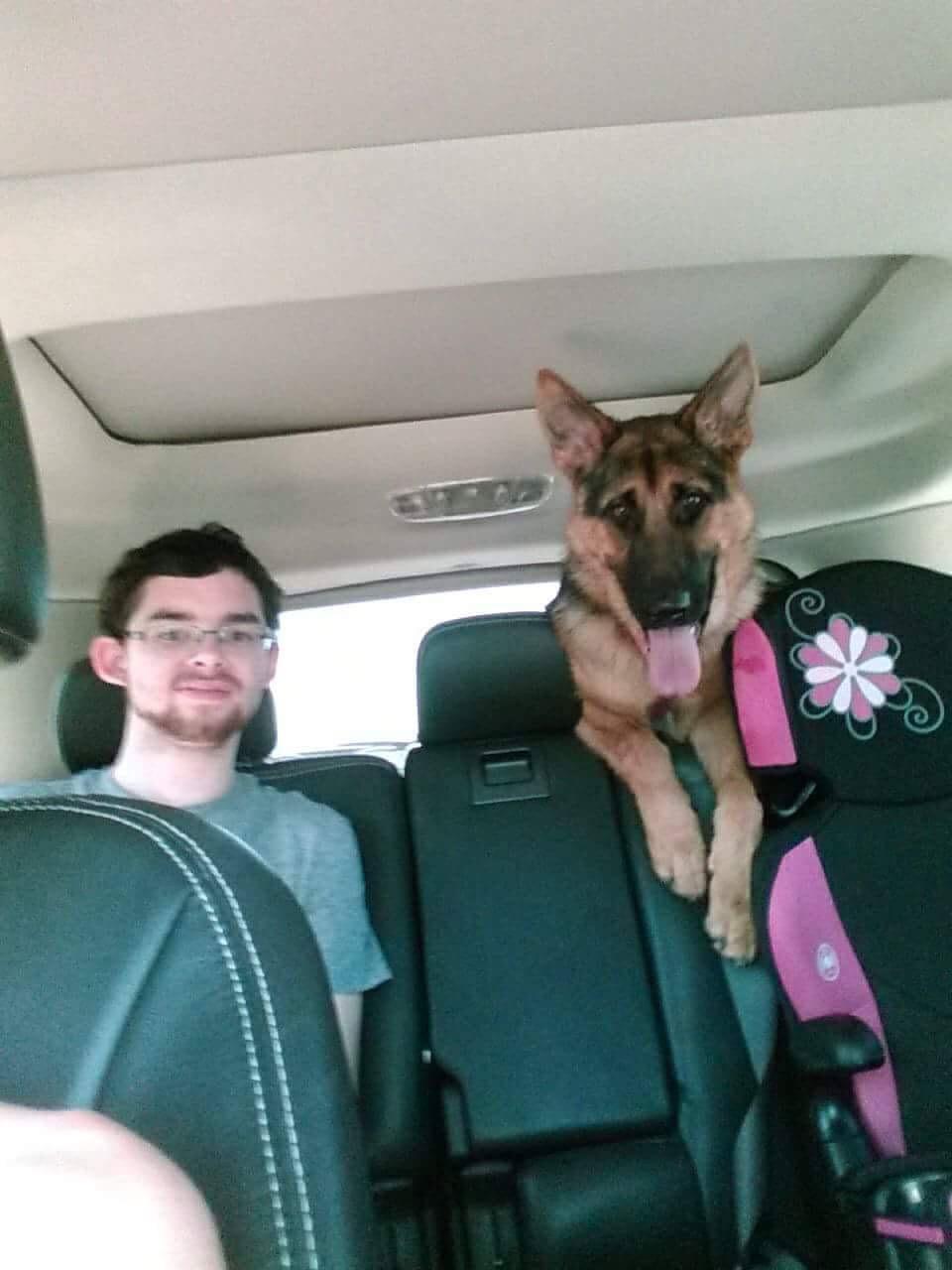 Puppy rides in car