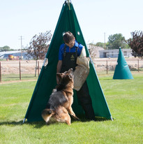 Southernwind Kennels, breed the Best to the Best  and consistently produce the Best!