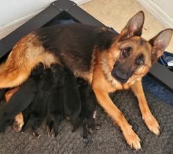 Wera&pups (3)
