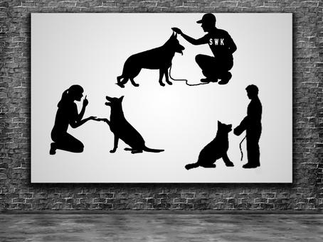 Understanding Normal Puppy Behavior