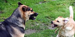 Dog Behavior – Reactive or Aggressive?