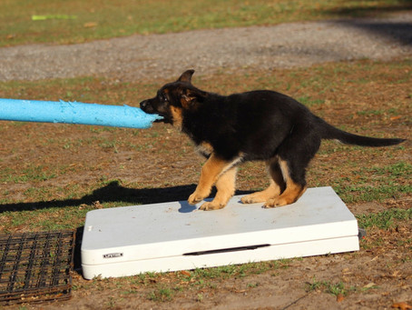 Sensory puppy training in Southernwind