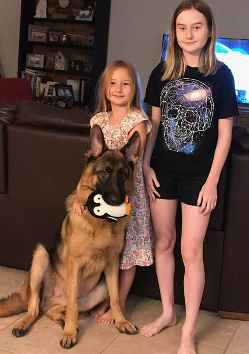 German Shepherds in Florida