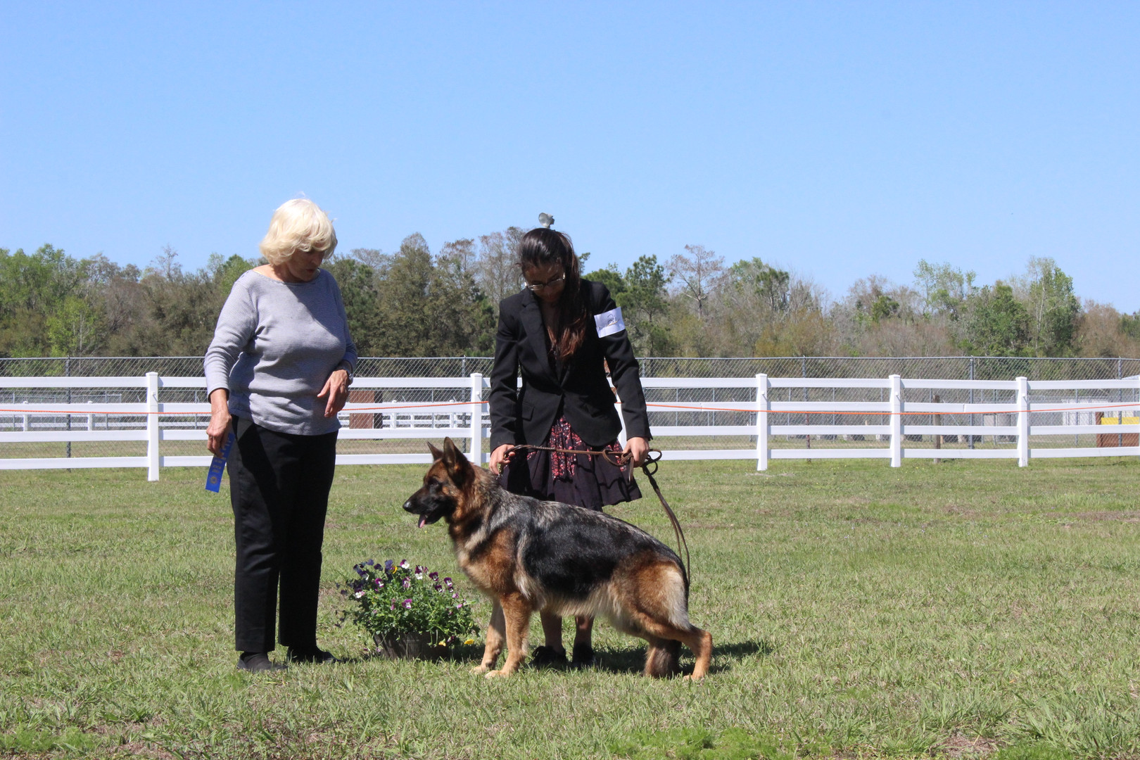 Southernwind Dogs, German Shepehrds in Florida