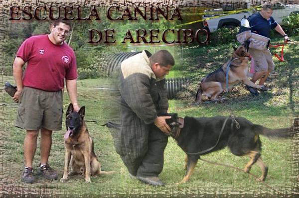 Escuela Canina de Arecibo