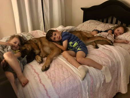 The Magic Of Kids and Dogs