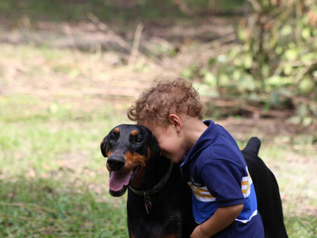What tasks do psychiatric service dogs perform?
