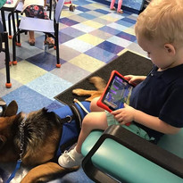Service Dogs that excell in their tasks