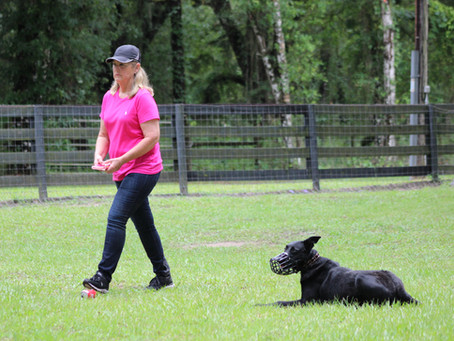 Benefits of Obedience Training for our Dogs