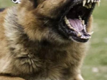 Dog Behavior Problems - Aggression