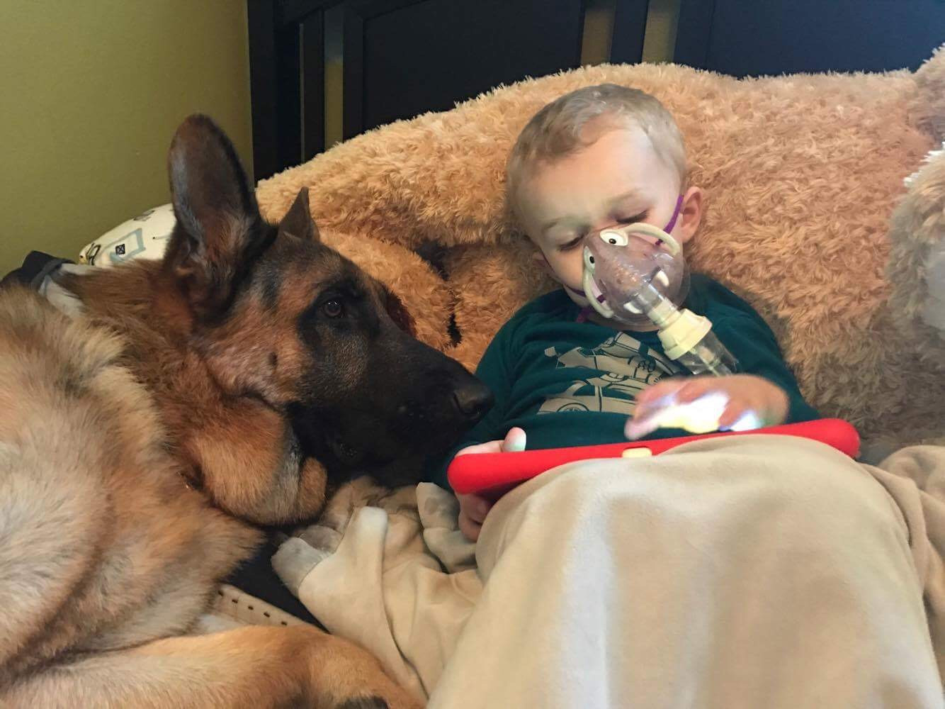 Our Service Dogs