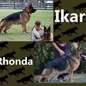Rhonda and Ikar puppies!