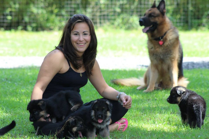 German Shepherd Puppies in Florida, Southernwind Kennels