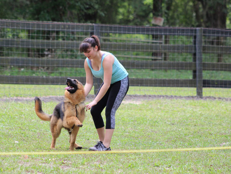 The Theory of Motivation in Dog Training