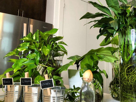 Beginner Tips for New Indoor Plant Owners