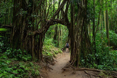 Manoa Falls. Oahu, Hawaii.