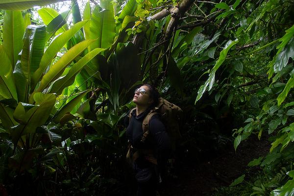 Pauoa Trails. Oahu, Hawaii.