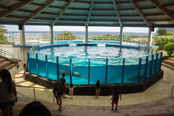 Sea Life Park. Oahu, Hawaii.