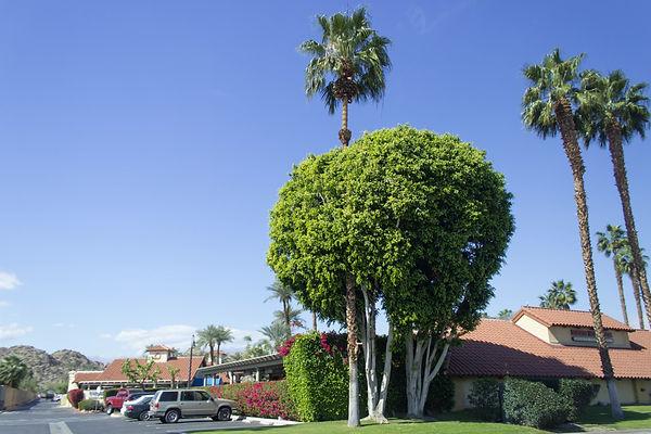 Palm Springs, Estados Unidos