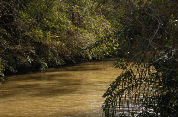 Cuaderno de Campo Delta Tigre