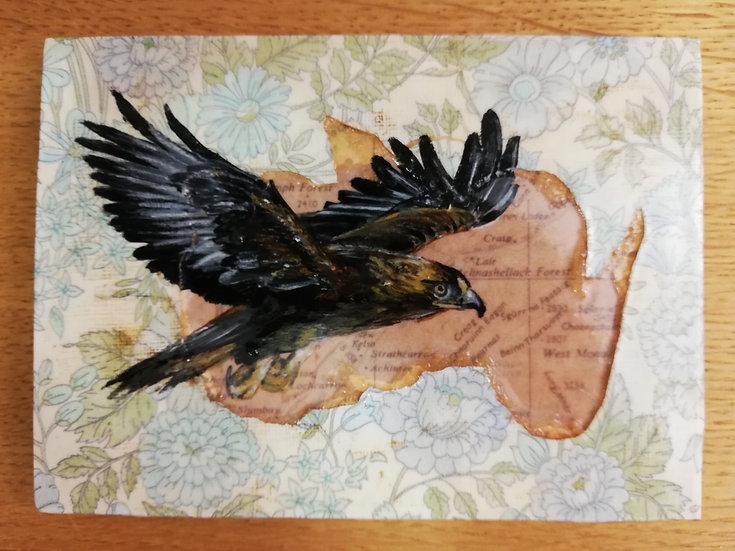 Highland Yearning - Golden Eagle