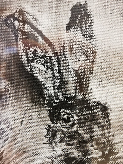 Hare in Bog Cotton