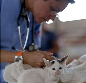 Kitten with vet.jpg