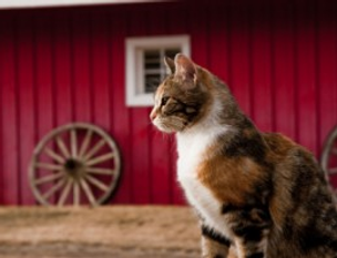 ARLNH Barn Cats