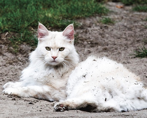 lost cat 2.jpg