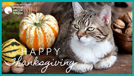 Thankgiving Cat.jpg