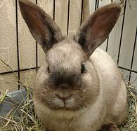 FB tan rabbit.jpg
