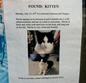 found-kitten-2.jpg