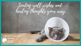 eCard Get Well-cat.jpg