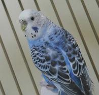 FB blue bird.jpg
