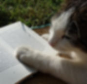 reading_book_cat_literature.jpg