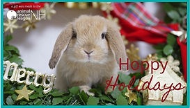 eCard Christmas Rabbit.jpg