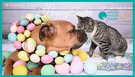 eCard Easter-dogcat.jpg