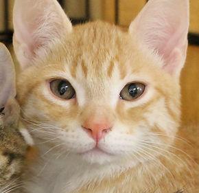 ARLNH Cat Adoptions