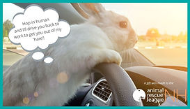 eCard Quarantine-rabbit.jpg
