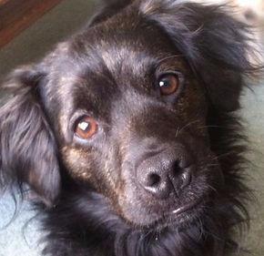 ARLNH Dog Adoptions