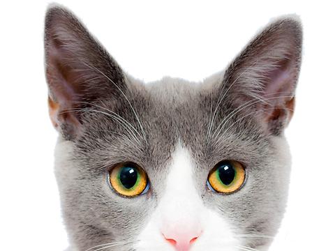 ARNH Adoptable Cats