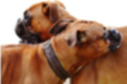 boxers leaning on each other.jpg