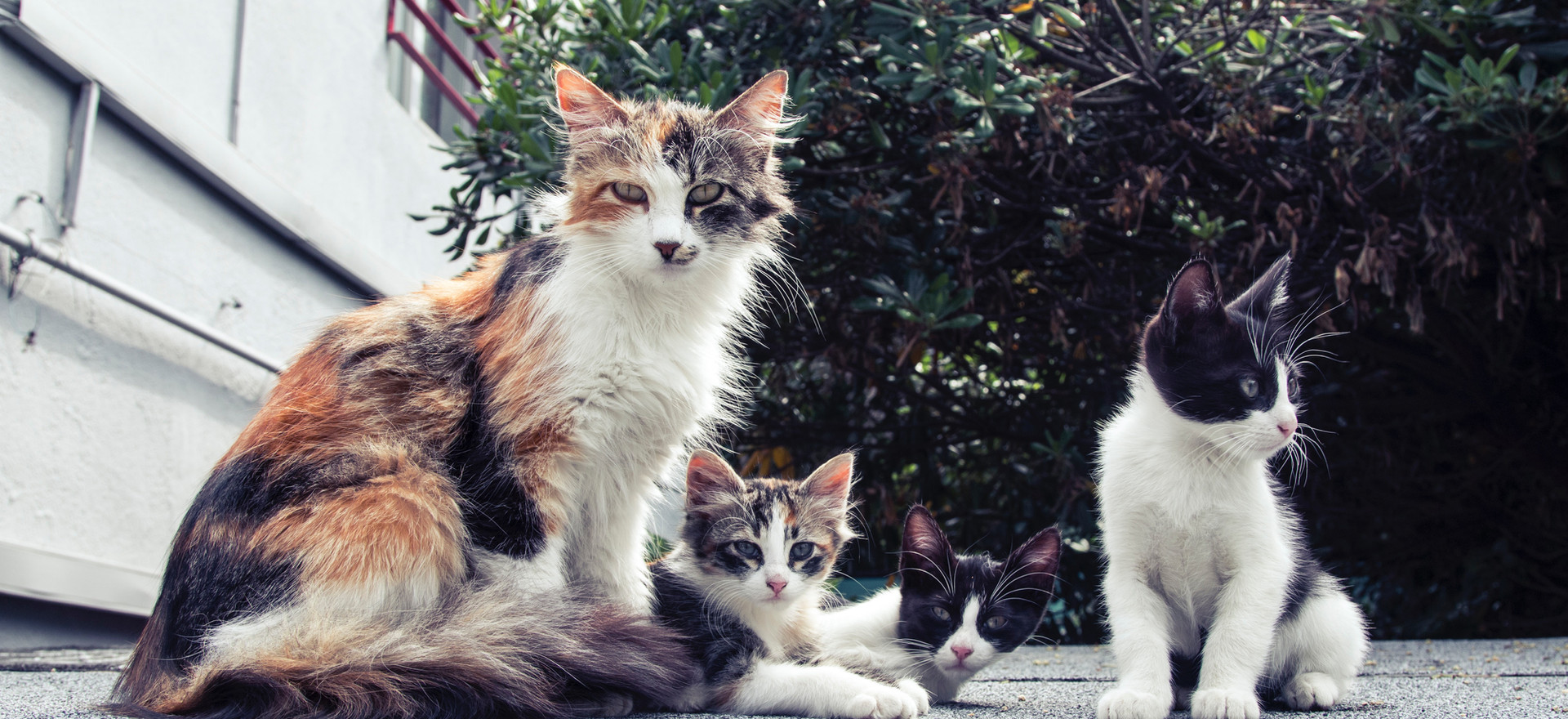 animals-breed-cats-140134.jpg