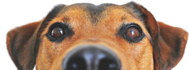 ARLNH Adoptable Dogs