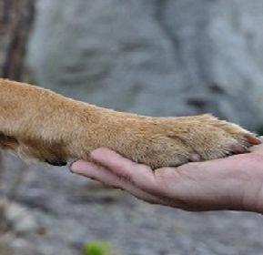 paw_hand_friendship_dog.jpg